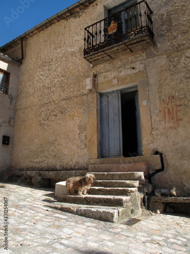 Papel de parede Perro vigilando la entrada de su casa