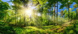 Fototapeta Las - Scenic forest of deciduous trees, with blue sky and the bright sun illuminating the vibrant green foliage, panoramic view