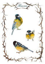 Set Of Three Blue Tit Birds In...