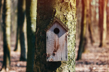 Old Bird House Hanging On A Tr...