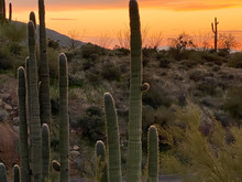Cactus Sunset Mountains