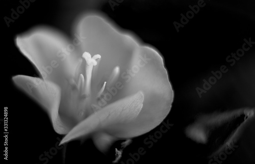 Small wild flowers from backyard in black and white. Artsy. Wallpaper Mural