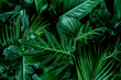 canvas print picture - Monstera green leaves or Monstera Deliciosa in dark tones, background or green leafy tropical pine forest patterns for creative design elements.