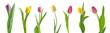 Beautiful tulip flowers on white background