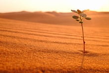 A Young Plant Growing On A Desert Land At Sunrise. Rebirth, Hope And New Beginnings Concept.