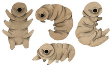 Set Of Cute Kawaii Watercolor Tardigrades, Water Bear On White Background. Collection Of Moss Piglets. For Children Prints. Isolated On White Background