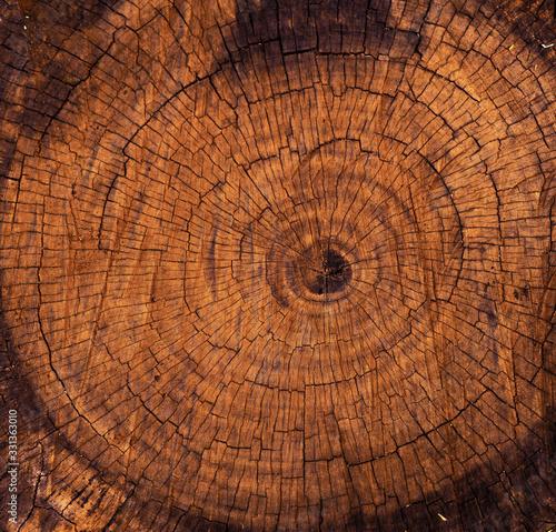 Obraz cross section of tree trunk - fototapety do salonu