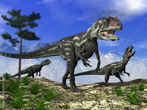 Fototapeta Three allosaurus dinosaurs walking on the hill - 3D render