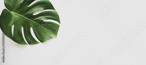 Photo Monstera leaf background panoramic