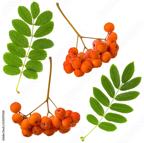 Rowan red ripe berry and green leaf isolated on white background Wallpaper Mural