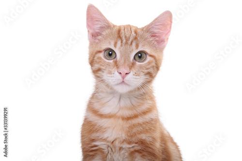 Beautiful little orange cat Tableau sur Toile