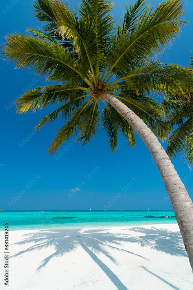 Fototapeta Sandy beach of tropical island in the Maldives