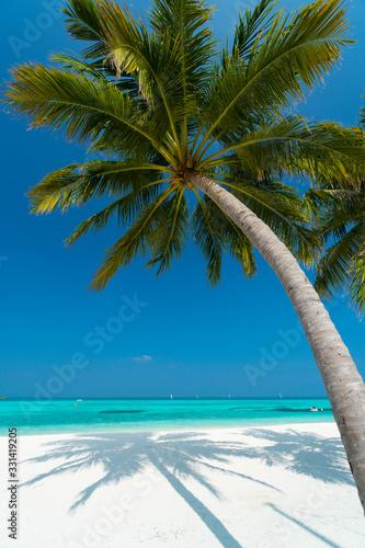 Sandy beach of tropical island in the Maldives - 331419205