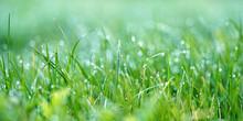 Grüne Gras Auf Der Wiese Mit Tautropfen