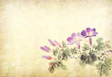 Chinese Painting Of Morning Glory