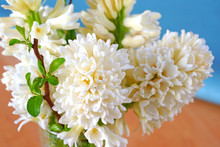 Bouquet Of Fragrant Cream White Hyacinth Flowers In A Vase