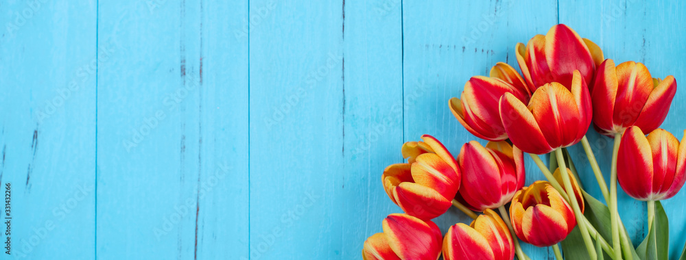 Fototapeta Tulip flower bunch, Mother's Day Design Concept - Beautiful Red, yellow bouquet isolated on blue wooden background, top view, flat lay, copy space