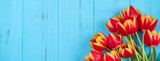 Fototapeta Kwiaty - Tulip flower bunch, Mother's Day Design Concept - Beautiful Red, yellow bouquet isolated on blue wooden background, top view, flat lay, copy space