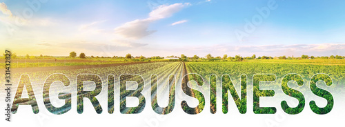 Photo Word inscription agribusiness on agricultural plantation field