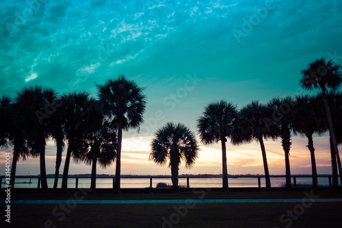 palm trees silhouette over sunset golden blue sky backlight in Florida, USA