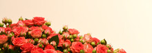 Red Special Roses Flowers Brid...