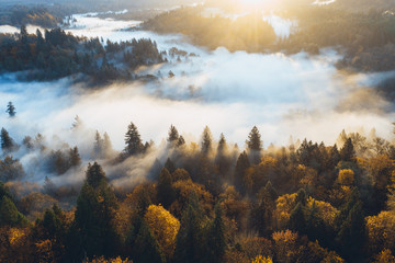 Nebellandschaft mit goldenem Sonnenaufgang auf verschiedenen Ebene von Bäumen und Sonnenstrahlen beim Sonnenaufgang