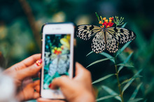 Beautiful Butterfly Photographed With A Smartphone. Focus On The Butterfly.