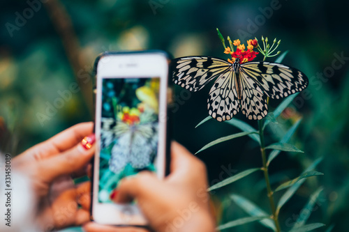 Beautiful butterfly photographed with a smartphone Wallpaper Mural