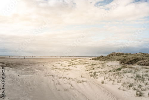 Dune landscape on the beach of St Peter-Ording #331460241