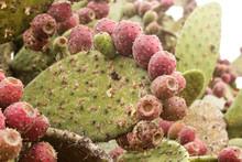 Cactus Nopal Tuna