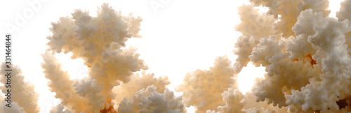 Dry white corals on white background. Panorama. Wallpaper Mural