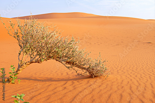 A shrub growing on a hot dry desert land Tapéta, Fotótapéta