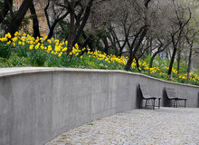 Bench At A Retaining Wall In A Park Of Black Bushes Early Spring Blooming Narcissus Pseudonarcissus On A High Flowerbed Path Of Granite Cubes