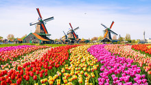 Dutch Windmill In Holland