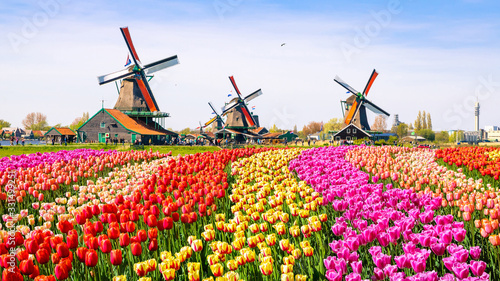 Obraz dutch windmill in holland - fototapety do salonu
