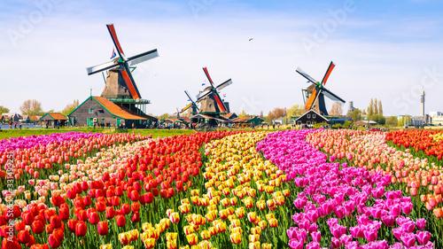 dutch windmill in holland #331499251