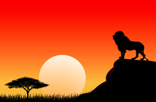 African Lion Sun Sunset Nature...
