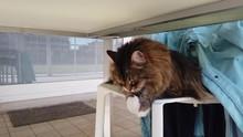 Tender Cat Lying On A Garden C...