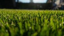 Green Grass Bokeh Close