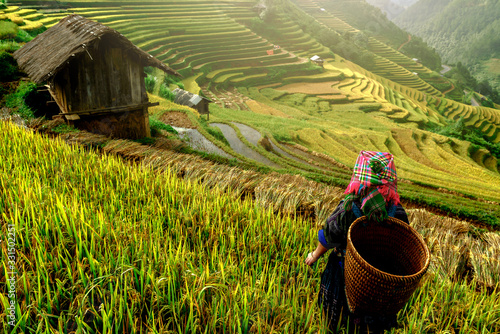 beautiful rice terraces, in Mu cang chai ,Yenbai, Vietnam. Fototapet