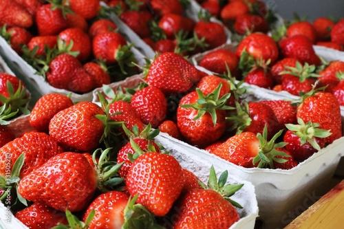 Fototapeta Frische Erdbeeren obraz