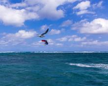 Kite Boarder And Sea Gull