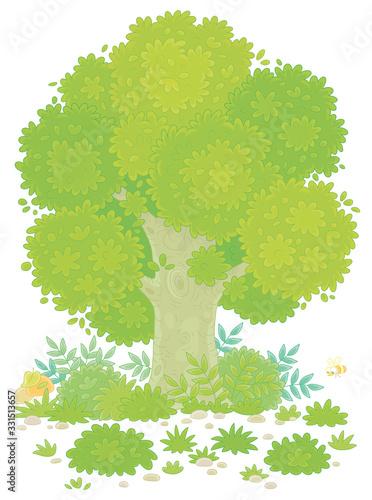 Big branchy oak tree, green bushes, grass and mushrooms on a pretty forest glade Tapéta, Fotótapéta