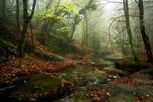 Arroyo En El Bosque En Otoño Con Hojas En El Suelo Y Niebla