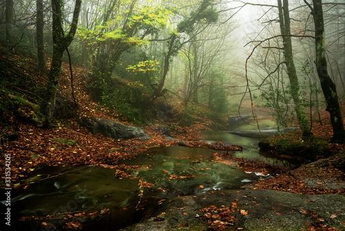 Arroyo en el bosque en otoño con hojas en el suelo y niebla Canvas Print