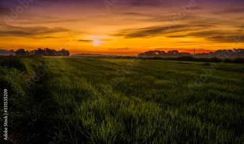 Vászonkép Prado verde al amanecer con arboles en el horizonte
