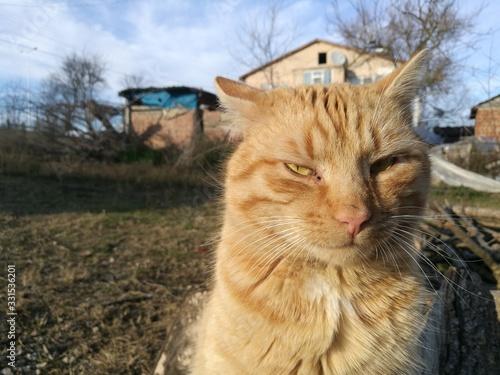 Obraz cat kitten animal pet - fototapety do salonu