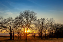 Sunset Behind Bare Trees With A Blue Sky.