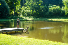 Dog Jumping In A Pond To Retri...