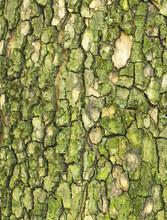 Green Tree Bark Close Up